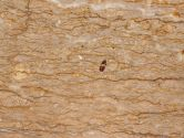 Golden Brown Travertine